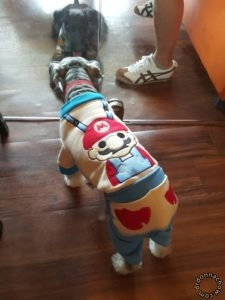 Ah Bee wears Super Mario outfit from Taobao