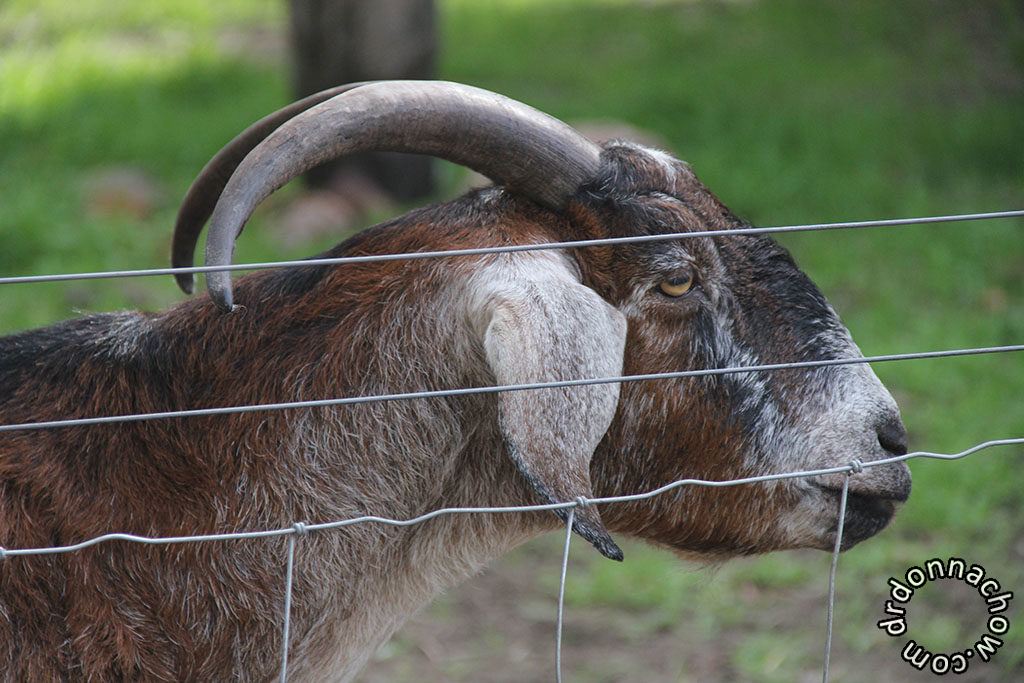 See the nice horns