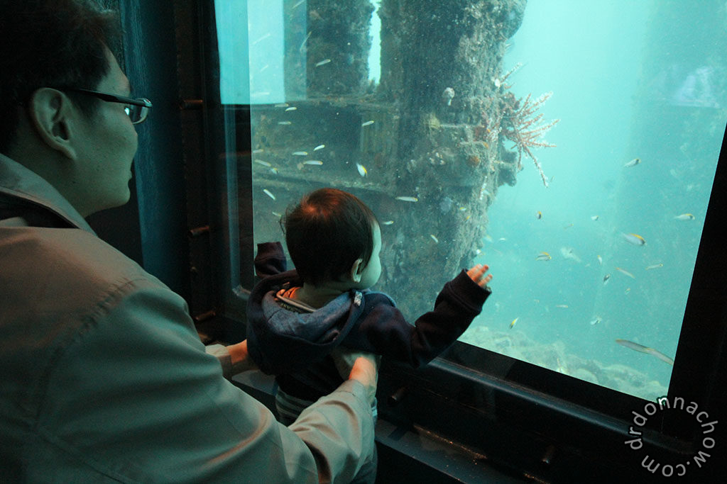 Baby looking at the fishes