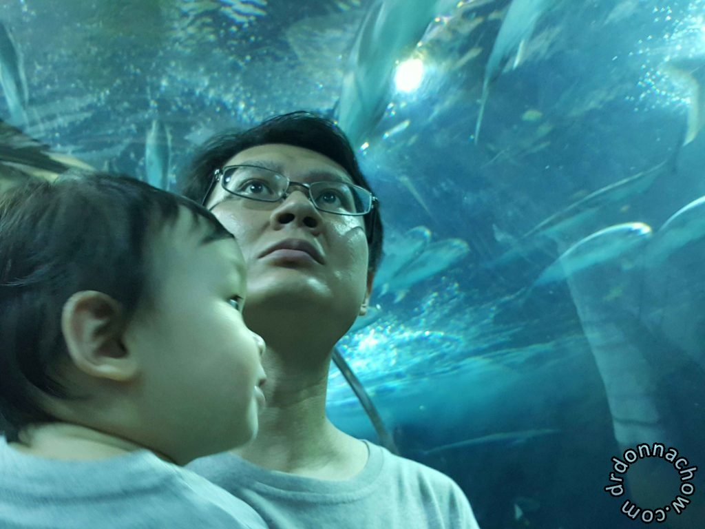 Baby looking at the big fishes