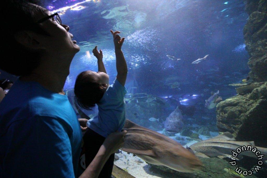 The Underwater World in Guam