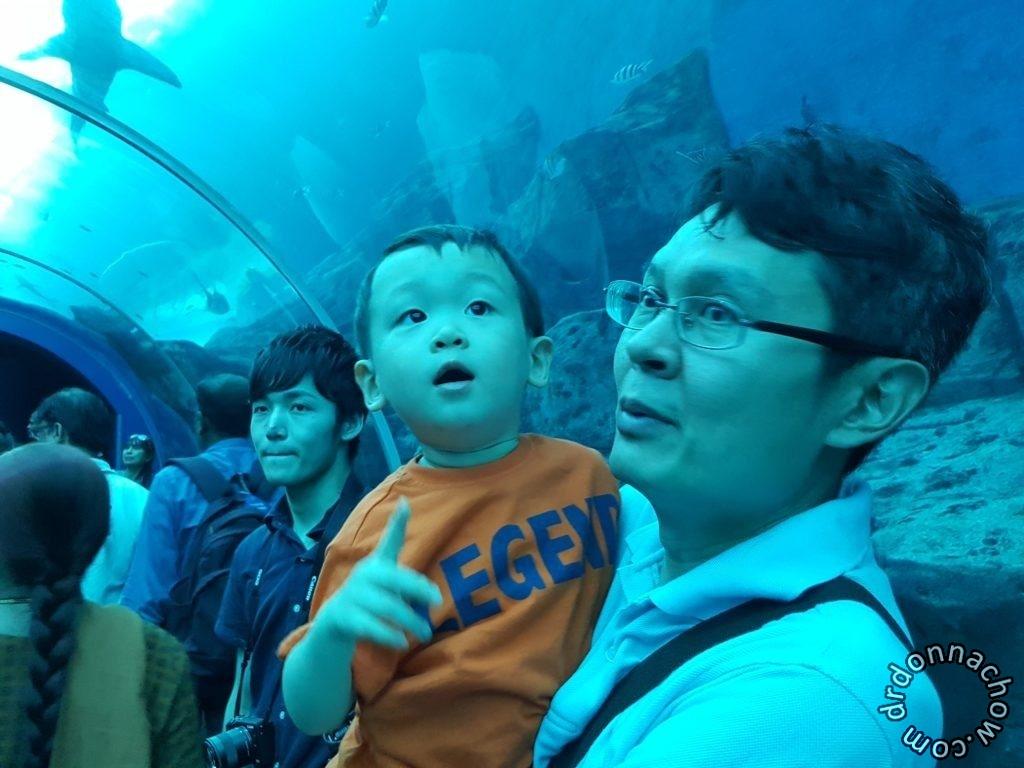 Observing the fishes at SEA aquarium, Sentosa