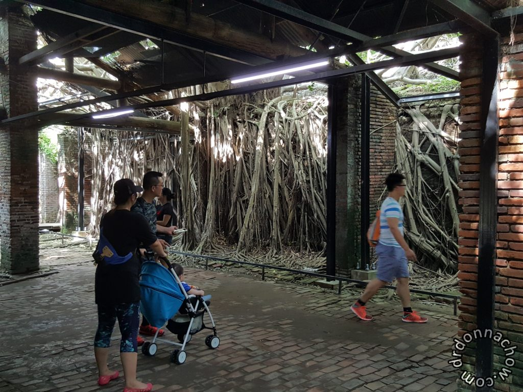 It was a house overgrown with the roots of a banyan tree