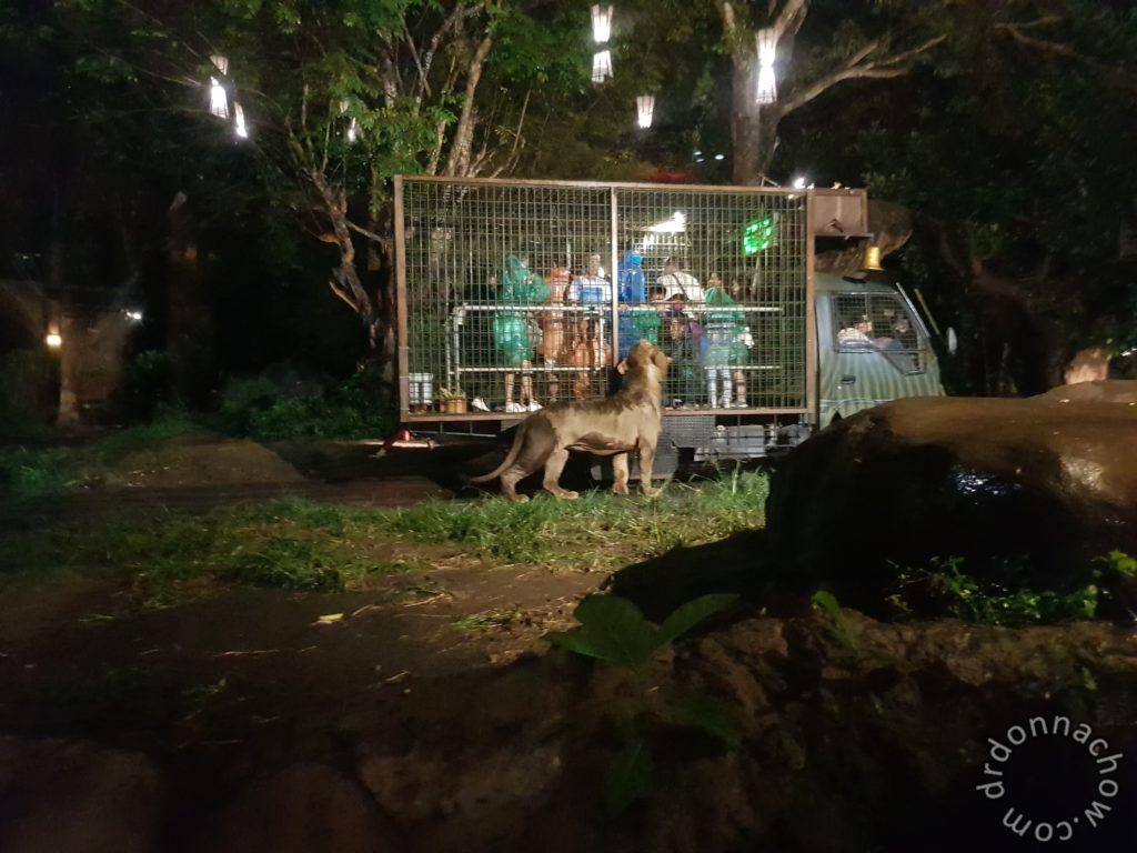 Our night time safari
