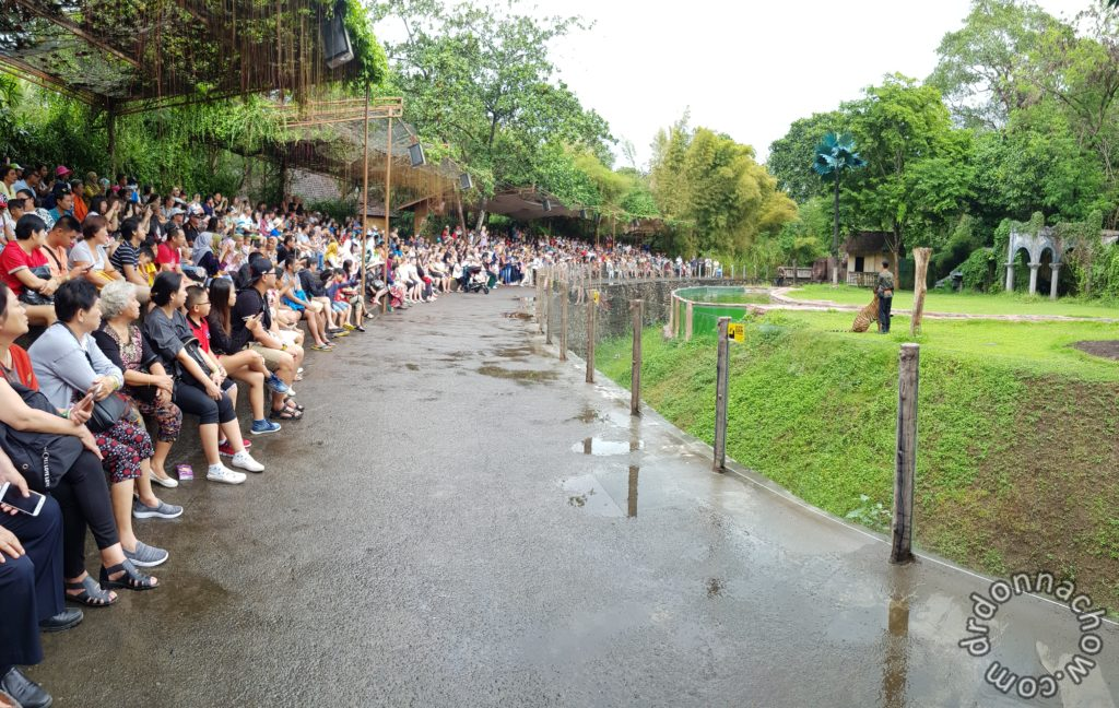 All waiting for the animal show to begin